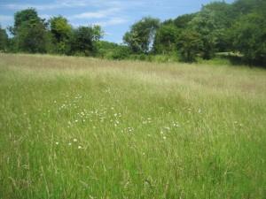 The wildflower meadow