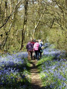 BGs wandering along a woodland path