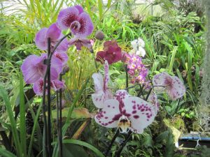 Beautiful orchids in the Orchid House